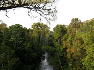 Bird's eye view of Sumatran tropical rainforest
